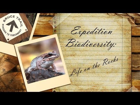 Expedition Biodiversity: Life on the Rocks