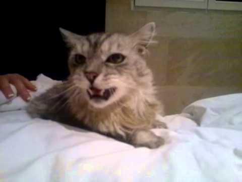 kiwi chat