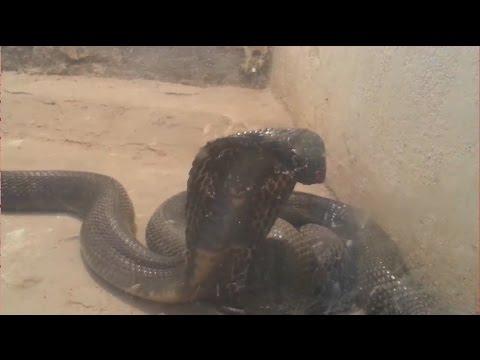 Snake House : Ayub National Park Rawalpindi, Pakistan thumbnail