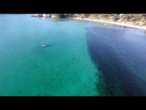Video: captan cientos de tiburones se acercaron a unos surfistas en bahía de Nueva Zelanda