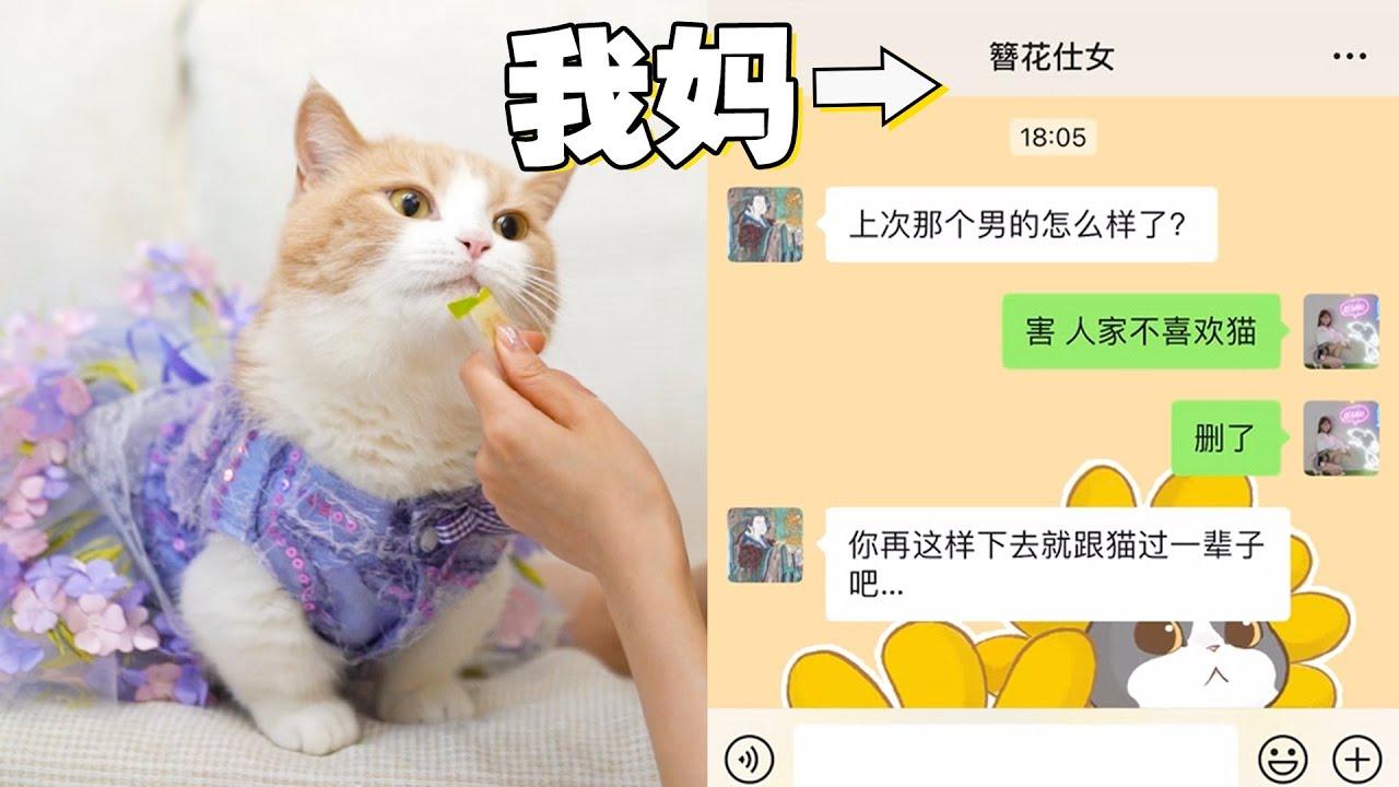 【喵来啦】单身养猫5年后,我妈:你嫁给猫吧!