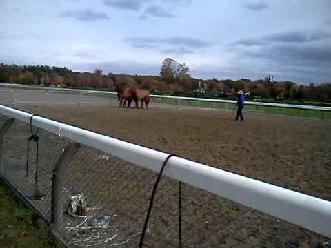 Guy McLean Saratoga Equine Exhibit and Expo 2011(1)