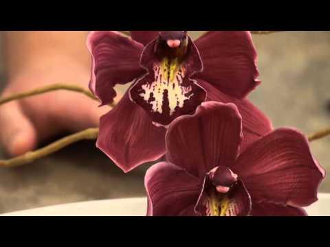 Robert Haynes Cymbidium Orchid | Paul Bradford Sugarcraft School