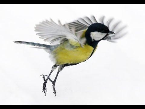 Птицы. красота полета!!! - YouTube