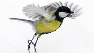Птицы. красота полета!!!