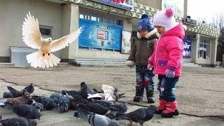гуляем на улице и кормим голубей.приучаем детей любить животных