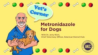 Metronidazole for Dogs | AKC Vet's Corner with Dr. Jerry Klein