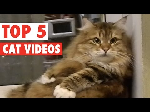 Top 5 Amazing Cats Compilation || March 4 2016