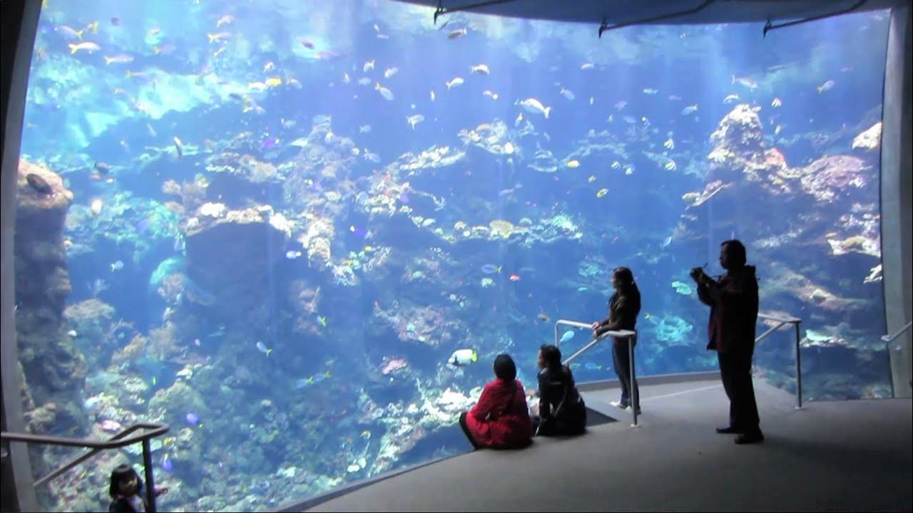 Fish for big aquarium - Fish For Big Aquarium