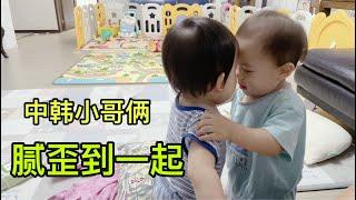 一歲的中韓雙胞胎哥倆碰腦門,嘴都快親一塊了,小哥倆關系太好了