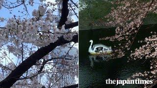 Tmb dance bedroom blossom Cherry teaser