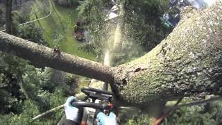 Fir Tree Removal Using Speed Line | Arborist Dan Holliday (climbingarborist.com)