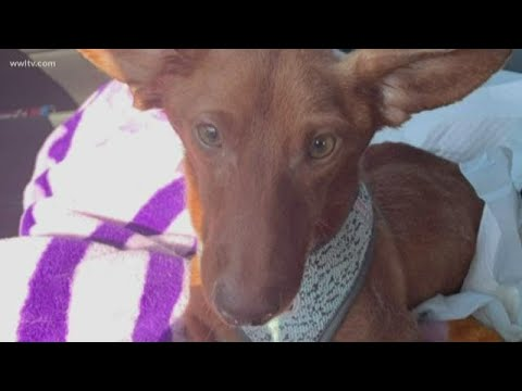 Mother, daughter arrested after dog had legs cut off from YouTube · Duration:  2 minutes 32 seconds