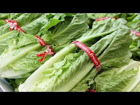 Thêm 31 người bị nhiễm E  coli sau khi ăn rau 'romaine'