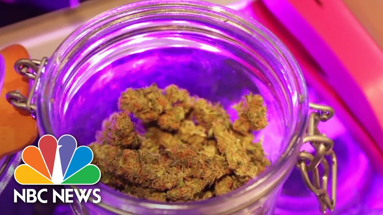 Legalized: A Year In The Life Of Colorado's Legal Weed Experiment | NBC News