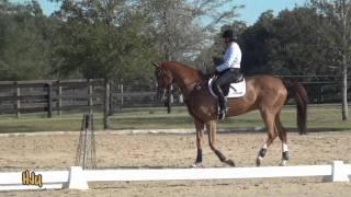 HorseJunkiesUnited.com - Karen O
