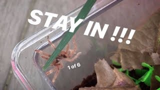 Unboxing 6 TARANTULAS and putting them TOGETHER ~ Stop coming out !!!