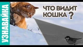 Как кошка реагирует на яркие предметы? Узнавайка.