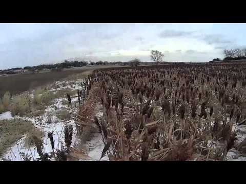 Nebraska Pheasant Hunt captured on Sony Action Cam