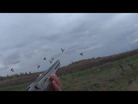 Охота на утку осенью. Точные выстрелы. Лучшие моменты на охоте.