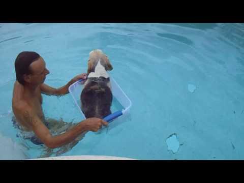 TEACHING DOG TO SWIM IN THE BOX  JULY 2017