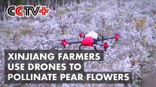 Farmers in Xinjiang's \