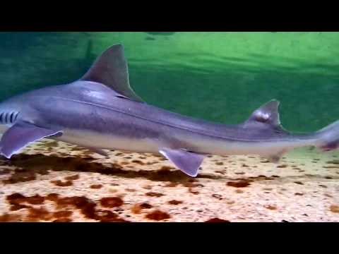 Drone Dives To Ocean Fish Tank: Close Up Of Sharks, Rays, Wreck Fish, Giant Seabass.
