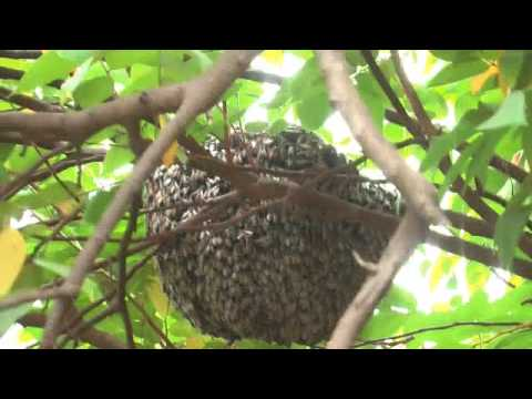 Bee Hive - YouTube