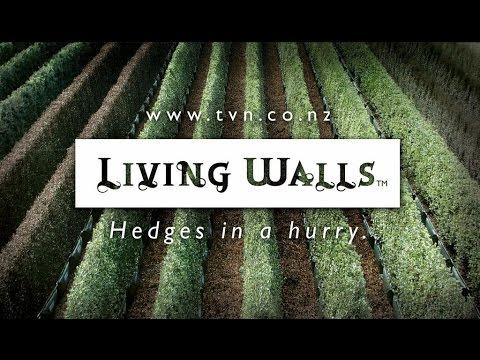 Living Walls™ on Thinking Forward