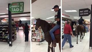 A Horse Is Actually Shopping