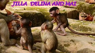 Jilla Delina Mai are playing mother DeeDee.#Monkey