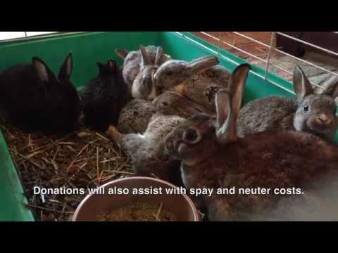 Help The 300 Hampton NJ Bunny Mill Rabbits
