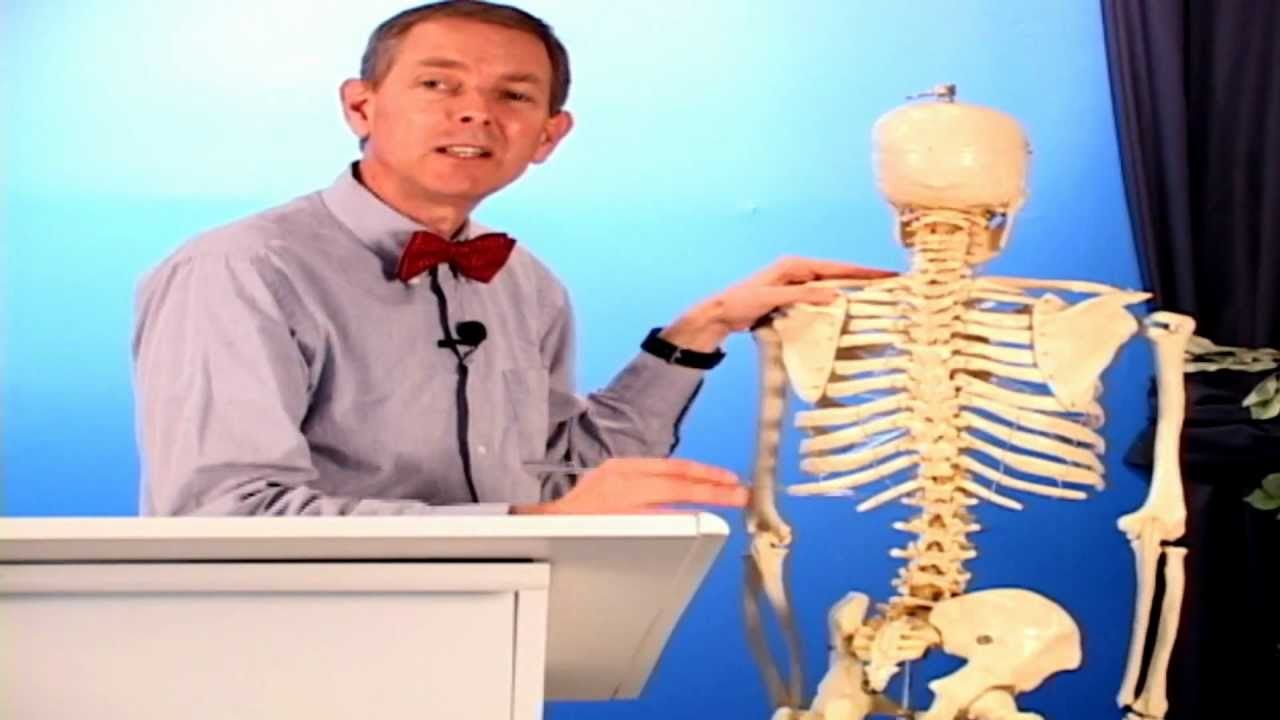 Anatomy & Physiology - Musculoskeletal System - YouTube