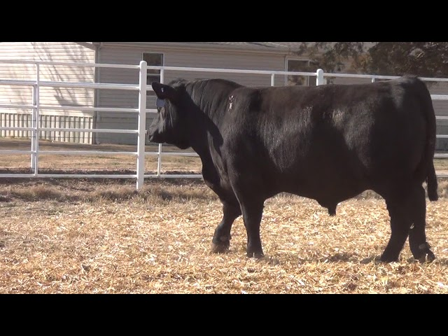 Express Ranches Lot 325
