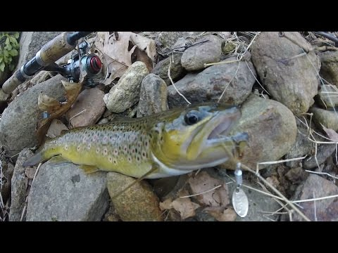 My Secret New Jersey Naturally Reproducing Trout Spot. Brook, And Brown Trout