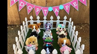 Adopt A Pet (Beanie Boo Cats & Dogs) Birthday Party