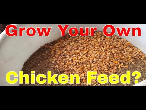 How To Make And Mix Cheaper Chicken Feed Doovi