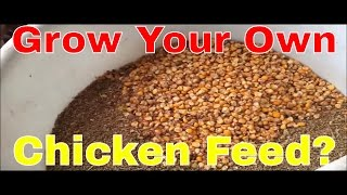 Grow Your Own Chicken Feed