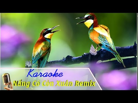 Nắng Có Còn Xuân Remix Karaoke 🌼 🌼 🌼