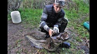 ЖЕСТЬ ВОТ ЭТО СОМ ! Крупный сом на перемет. Рыбалка с ночевкой. Ночная рыбалка на сома.
