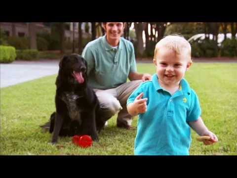 Dog Saved Baby From An Abusive Babysitter - YouTube