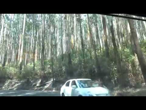 Jeep Safari In Deep Forest, Mudumalai, Tamilnadu : Nilgiri Mountain