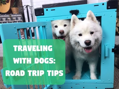 Traveling With Dogs: Road Trip Tips With Impact Dog Crates