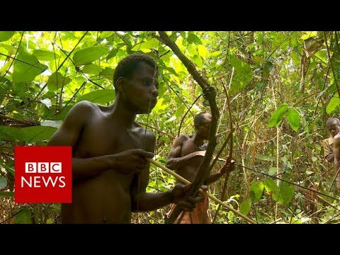 Congo: The pygmies of Boyanga - BBC News