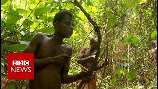 Congo: The pygmies of Boyanga - BBC News