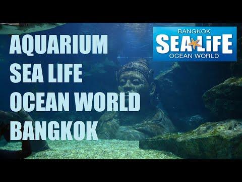 SEA LIFE OCEAN WORLD BANGKOK Aquarium  Siam Paragon