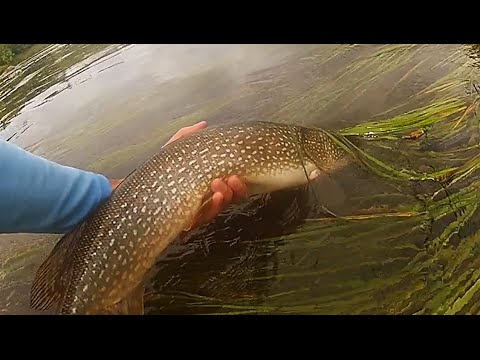 Fly fishing brammer 39 s custom flies duluth mn 2016 for Duluth mn fishing report