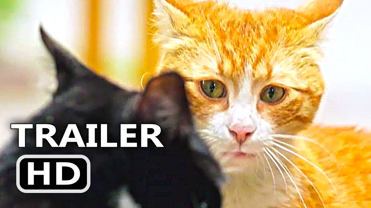kedi official trailer   clip  2017  cats documentary movie