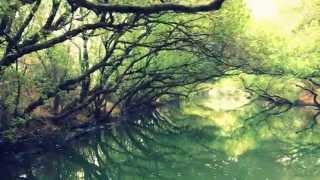台南 - 四草綠色隧道