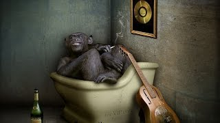 Смешное видео про обезьян! Смотреть до конца!